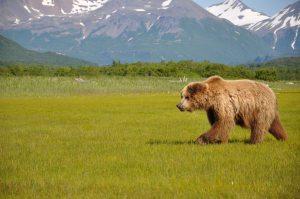 AlaskaB16