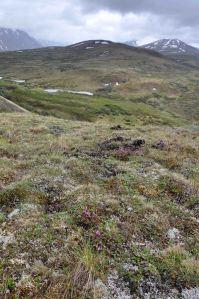 AlaskaLandscape16