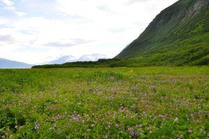 AlaskaLandscape2