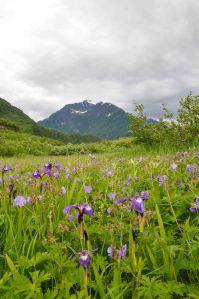 AlaskaLandscape5