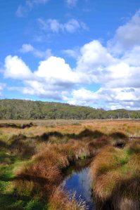 Polblue Swamp 9