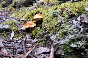 Fungi_08