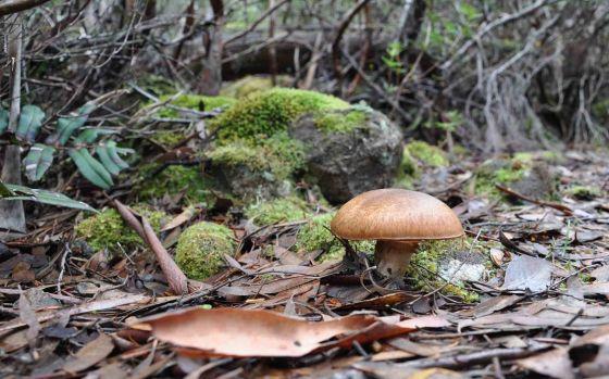 Fungi_11