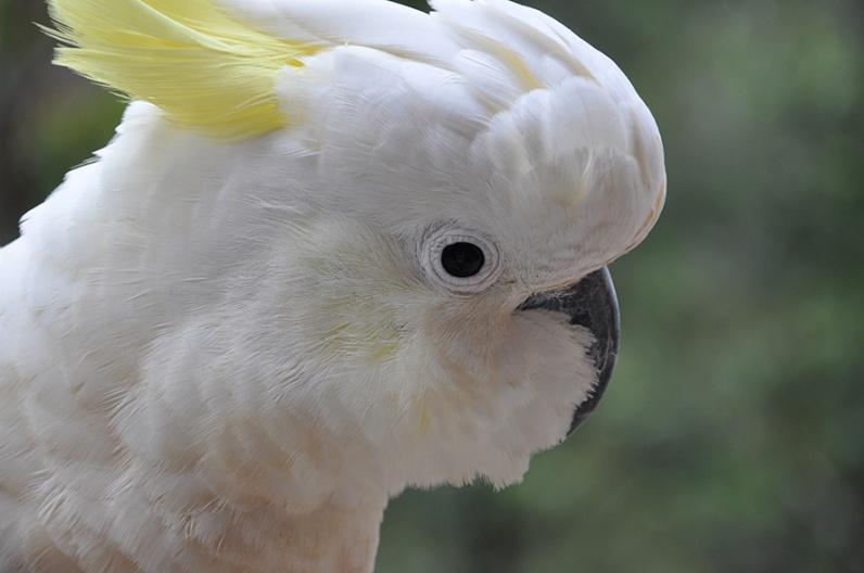Birdies_08